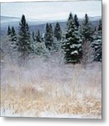 Maine Woods Metal Print