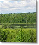 Mainely Green Metal Print