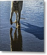 Maisie At The Beach Metal Print