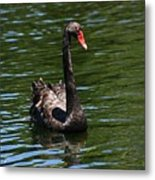 Majestic Black Swan Metal Print