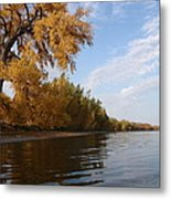 Majestic Cottonwood Metal Print