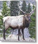 Majestic Elk Metal Print