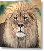 Majestic King Metal Print by Everet Regal