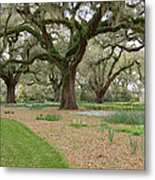 Majestic Live Oaks In Spring Metal Print