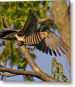 Majestic Mourning Dove  Metal Print