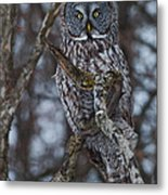 Majestic Owl Metal Print
