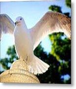 Majestic Seagull II Metal Print