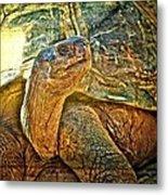 Majestic Tortoise Metal Print