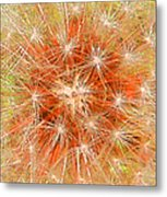 Make A Wish In Orange Metal Print
