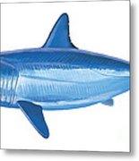 Mako Shark Metal Print