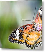 Malay Lacewing Butterfly Metal Print