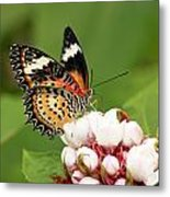 Malay Lacewing Metal Print