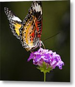 Malay Lacewing On A Flower  Metal Print