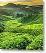 Malaysia, Pahang, Cameron Highlands Metal Print