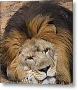 Male African Lion Metal Print