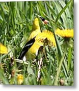 Male American Goldfinch Camouflage Metal Print