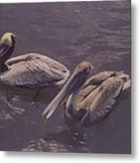 Male And Female Pelicans Metal Print