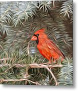 Male Cardinal In Spruce Tree Metal Print