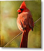 Male Cardinal In The Sun - Digital Paint Metal Print