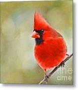 Male Cardinal On Angled Twig - Digital Paint Metal Print
