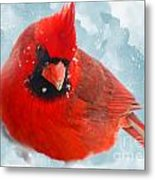 Male Cardinal On Snow Day - Dgital Paint Metal Print