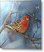 Male House Finch With Blue Texture Metal Print