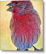 Male Housefinch - Digital Paint Metal Print