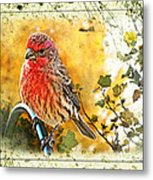 Male Housefinch Photoart Metal Print