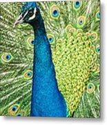 Male Indian Peacock Metal Print