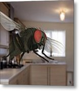 Male Lesser Housefly In Flight, Sem Metal Print
