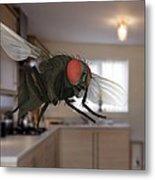 Male Lesser Housefly In Flight, Sem Metal Print