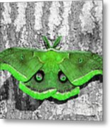 Male Moth Green Metal Print by Al Powell Photography USA
