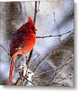 Male Northern Cardinal Oil Paint Effect Metal Print