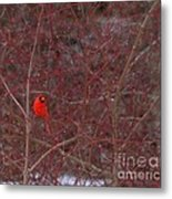 Male Red Cardinal In The Snow Metal Print