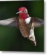 Male Redhead In Flight Metal Print