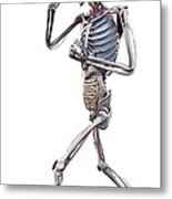 Male Skeleton And Organs, Artwork Metal Print by Science Photo Library