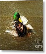 Mallard Bath Time Metal Print