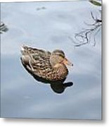 Mallard Duck Smile Metal Print