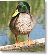 Mallard Duck On Log Metal Print