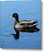 Mallard Duck With Reflection On The Water Metal Print