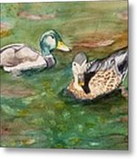 Mallard Ducks With Spawning Salmon Metal Print