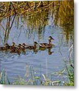 Mallard Hen And Ducklings Metal Print