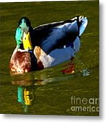Mallard Male Duck Metal Print