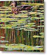 Mallard Pond Metal Print