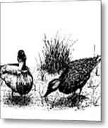 Mallards In The Marsh Metal Print