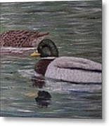 Mallards On Holloway Cove Metal Print