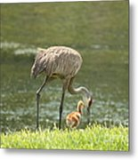 Mama And Chick Metal Print