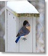 Mama Blue Bird In Winter Metal Print