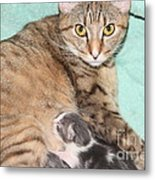 Mama Cat And Her Kittens Metal Print