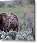 Mama Grizzly Guiding Cub Metal Print